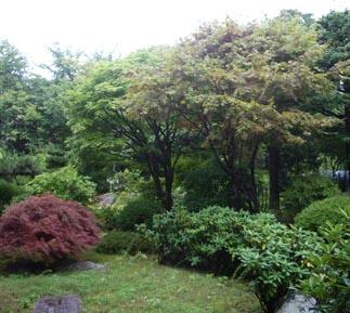 庭・樹木の解体